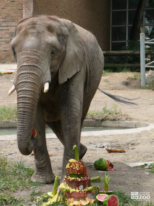 Elephant Enrichment at Old Pachyderm Building