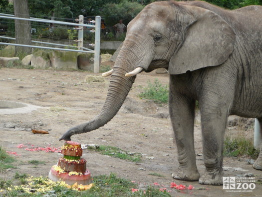 Elephant Enrichment at Old Pachyderm Building 3
