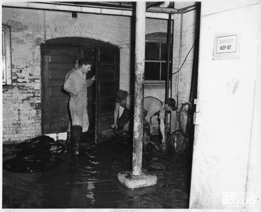 1959 - Flood Damage - Reptile Building (2)