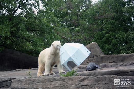 2012 - Polar Bear and Igloo during Creature Comforts