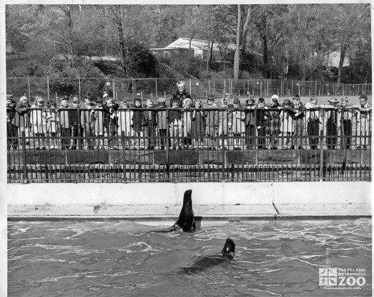 1960's - Crowd at the Old Sea Lion Pool (2)