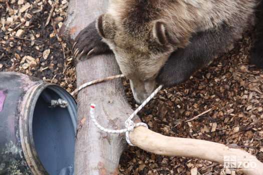 Creature Comforts: Chewing on the Rope