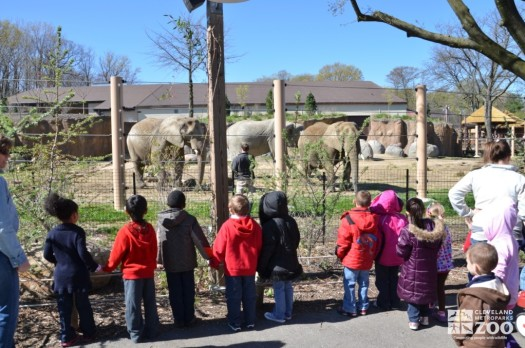 School Group Observes Elephants in Connections to Africa Program