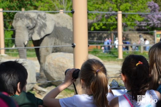 Kids Observing and Collecting Elephant Data
