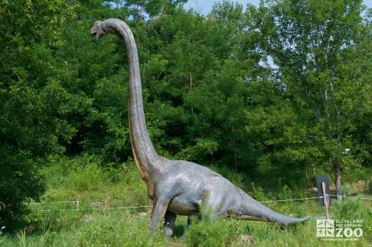 "Brachiosaurus ""arm lizard"""