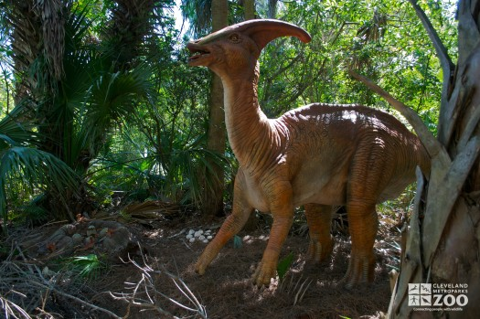 "Parasaurolophus ""like crested lizard"""