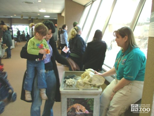 2007 Primate Awareness Day - Voluteer Jody Serena gets guests close to primate artifacts