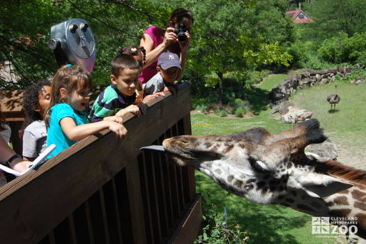 Guests Feeding the Giraffes