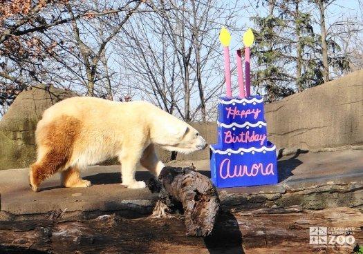Aurora with a Papier Mache Birthday Cake