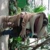 v1366821284/iefre5fmbnburdo4ywhx.jpg