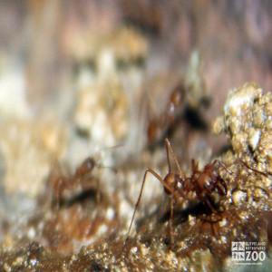 Leaf Cutter Ants Up Close