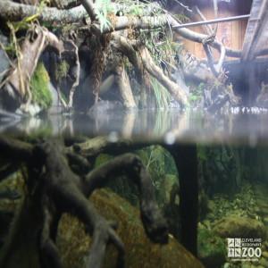 Brook Trout Exhibit