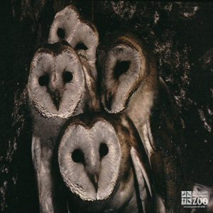 Group of Barn Owls