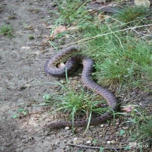 Children's Python in Grass 3