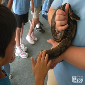 Summer Day Camp - Snake