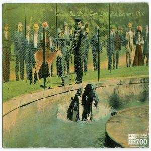 "1912 - Postcard Depicting Seals and Sea Lions at ""Wade Park Zoo"""