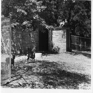 1948 - Deer (2)