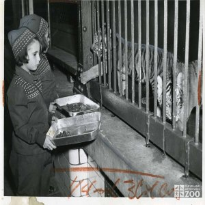 1948 - Kids Feeding Tiger Cubs
