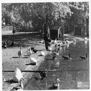1940 - Waterfowl Lake