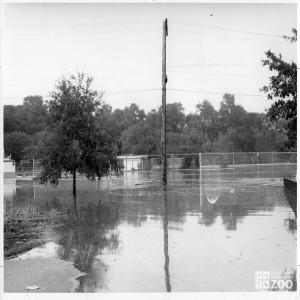 1964 - Flood (2)
