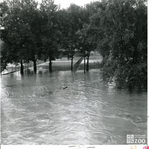 1964 - Flood (3)