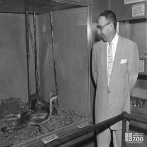 1950's - Axelrod and King Cobra