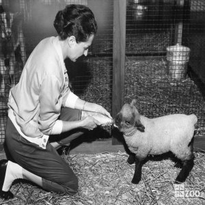 1959 - Visitor Feeding Lamb