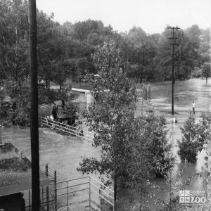 1959 - Workers Clear Flood Damage
