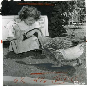 1955 - Goose and Child