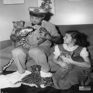 1950's - Turnauckas and Daughter with Leopard Cubs