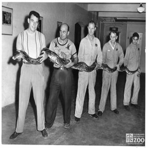 1951 - Zoo Keepers with Python