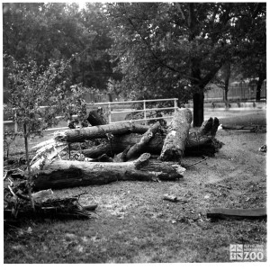 1964 - Flood Damage (2)
