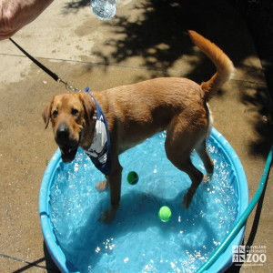 2012 - Meet Your Best Friend - Dog in Pool (2)