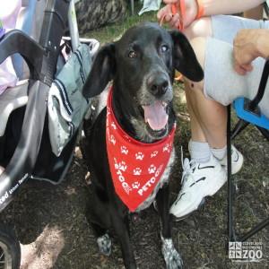 2012 - Meet Your Best Friend - Panting Dog