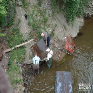 Big Creek Clean-up: Terrain Challenge