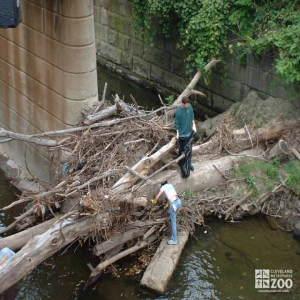 Big Creek Clean-up: Natural vs Man Made Debris