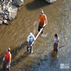 Big Creek Clean-up: It's Dirty Work