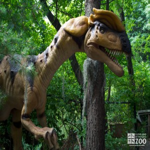 Dilophosaurus Up Close