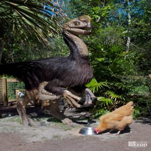 Citipati and Chicken