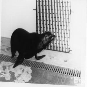 1982 - Sea Lion