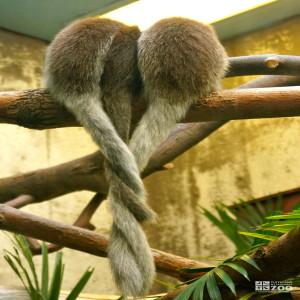 Titi Tails