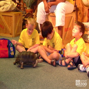 2005 Summer Day Campers with a Turtle