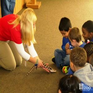 Preschool Safari with the Skink