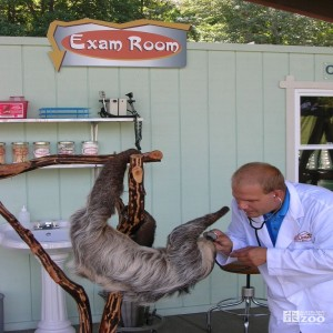 Doctor Zoolittle and the Sloth