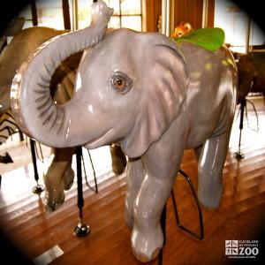 African Elephant Calf - Carousel