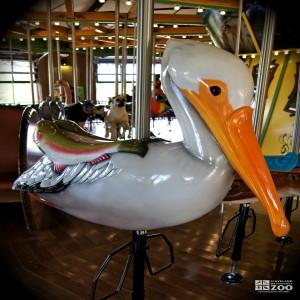 American White Pelican - Carousel
