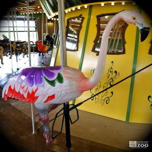 Chilean Flamingo - Carousel