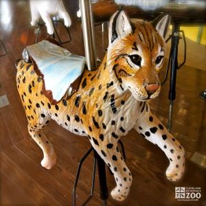Eurasian Lynx - Carousel
