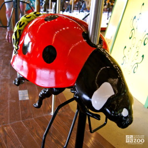 Ladybird Beetle - Carousel
