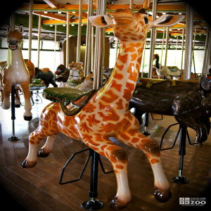 Masai Giraffe Calf - Carousel